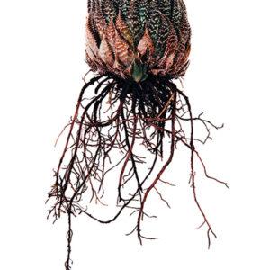 Fine Art Classic Botanical Print
