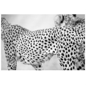 Wildlife Cheetah Print